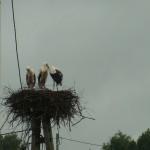 Gniazdo bocianów